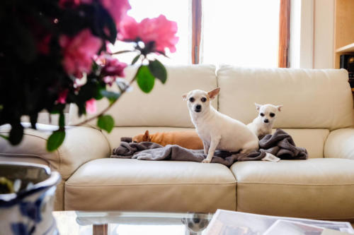 hotel-animal-friendly-liguria